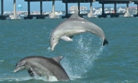 dolphin-research-and