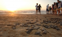 sea-turtle-release-south-padre-island